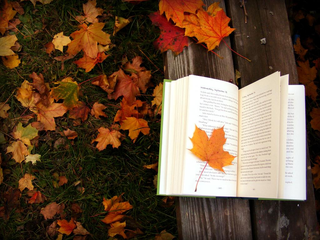 Чтение книги на лавочке в парке