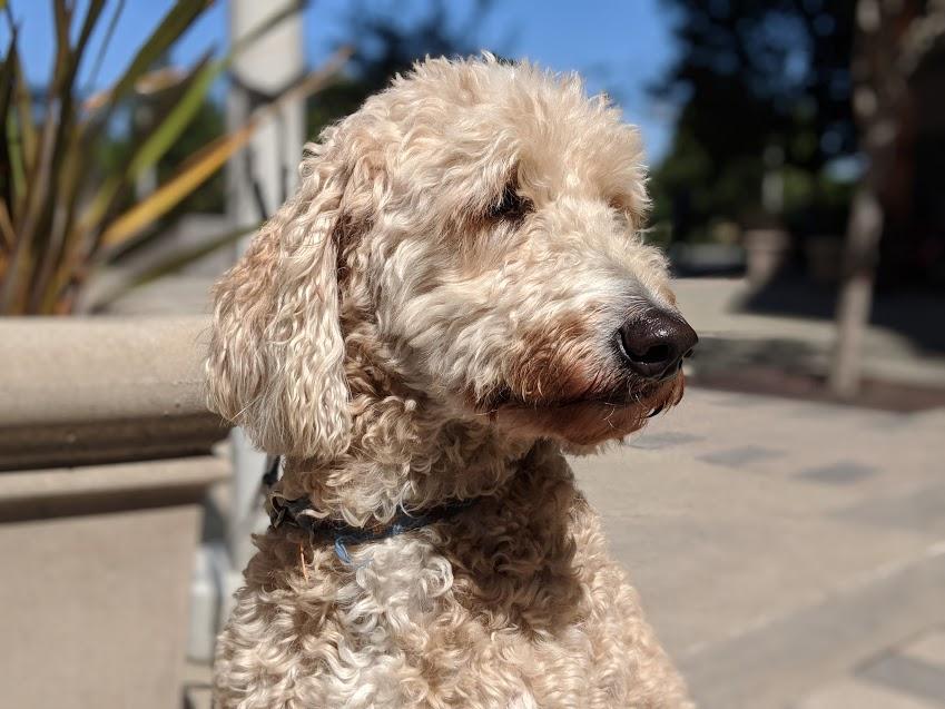 4 Фото собаки