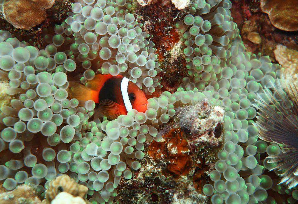 Фото підводного світу