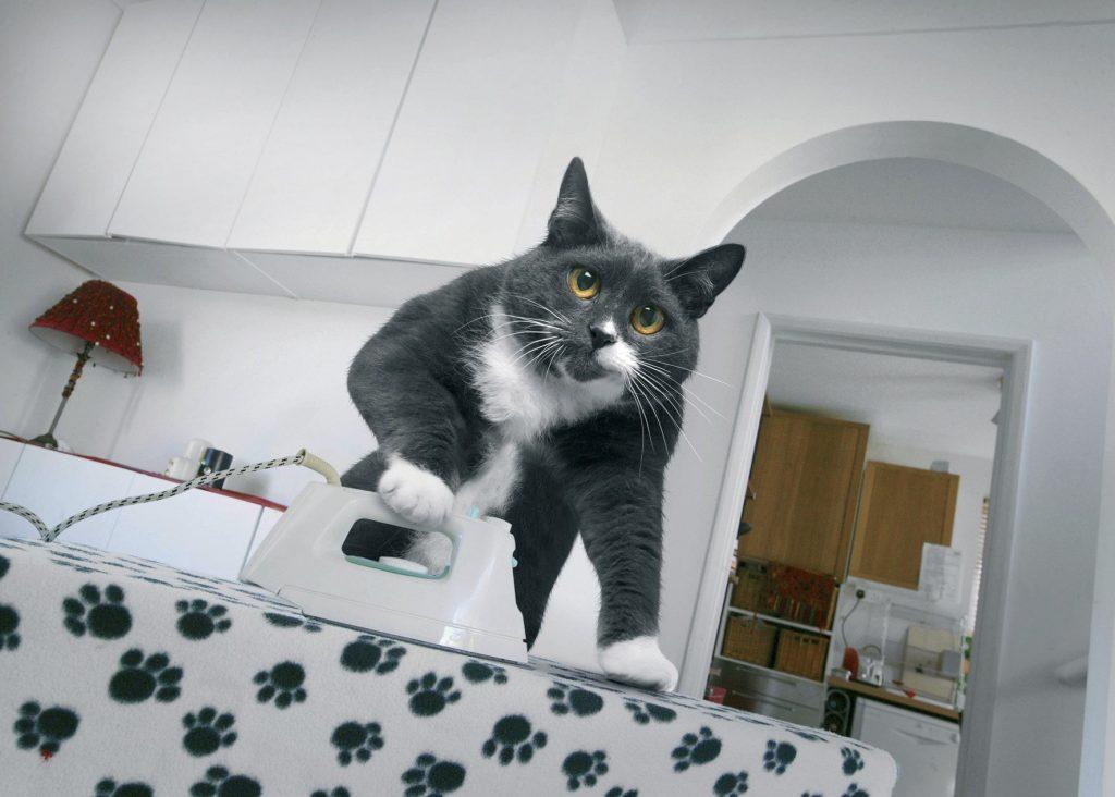 Навіть коти гладять свої речі