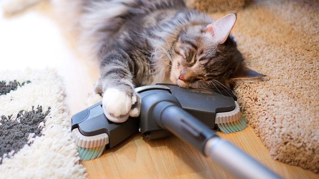 Пылесос и кот